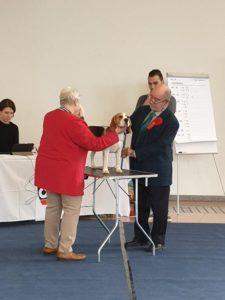 Beagle-Zucht-Brigitta-Erhart-Deckrüde-Toni Flor-2