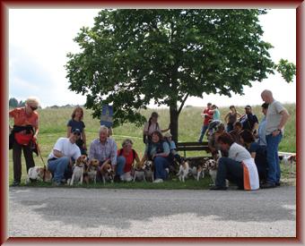 Beagle-Zucht-Brigitta-Erhart-Treffen-Landesgruppe-Mitte-2