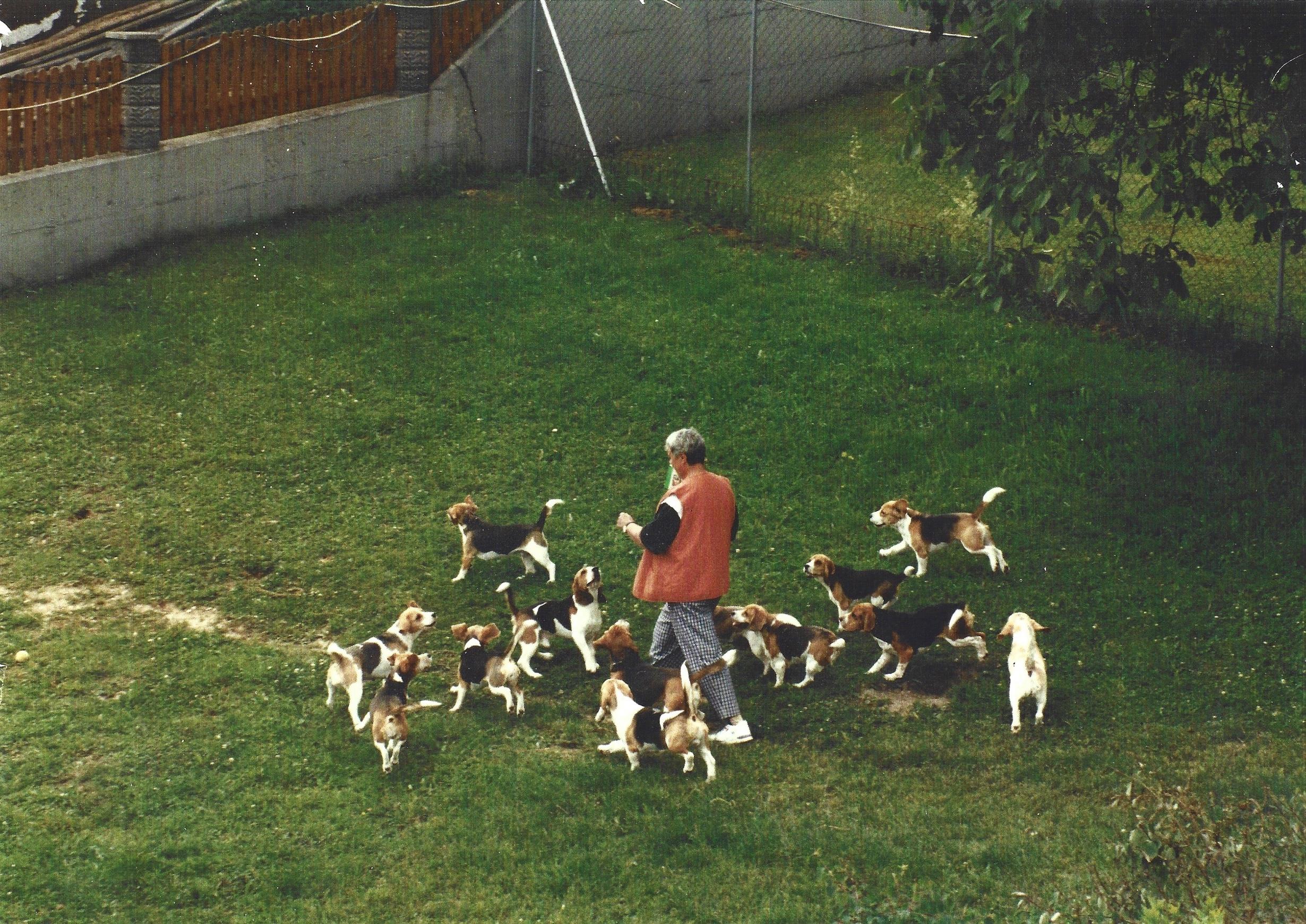 Beagle-Zucht-Brigitte-Erhart-Header